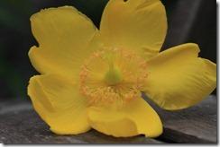 Yellow under