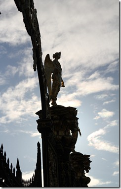 Backlit image 5